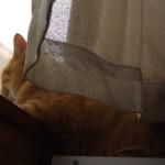 隣家との窓の位置をずらす