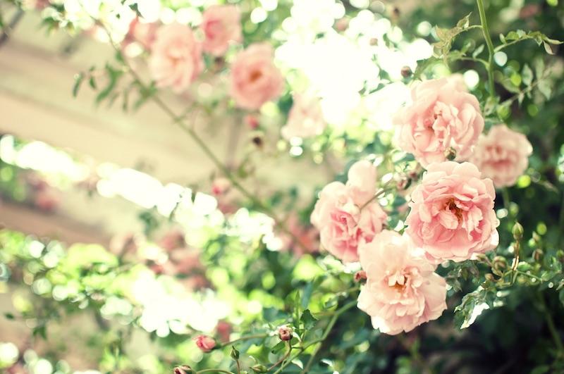 flower_bara