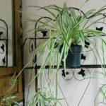 観葉植物を置く場所は窓際がベスト