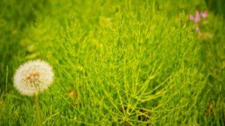 除草剤を使って草抜きの作業を時短する